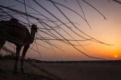 Rajasthan - Jaisalmer - Desert Safari with Camels-61