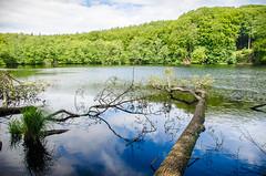 Wald - See - Baumstamm - Spiegelung (GS 1977) Tags: sassnitz mecklenburgvorpommern deutschland de jasmund nationalpark spiegelung see landscape