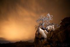Mysterium (MiramontesPhotography) Tags: deadtree snag joshuatreenationalpark crag nightscape cloudscape