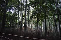 嵐 画像15