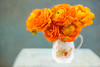 Orange Ranunculus Still life (photoart33) Tags: flower stilllife orange ranunculus
