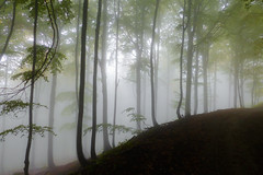 Misty wood (giansacca) Tags: bosco faggeta garessio faggio faggeto trees alberi arbres piante nebbia fog piemonte aoi elitegalleryaoi bestcapturesaoi foresta forest