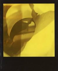 Practice (yche21) Tags: autumn polaroid sx70 roidweek2017 experimental plant childhood script practice light