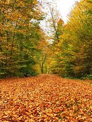 Herbstfarben , Autumn colors (Blende2,8) Tags: germany herbstlandschaft landscape autumnlandscape schwabenland schönbuch waldweg bäume blätter wald autumn autumncolors herbstfarben badenwürttemberg deutschland iphone