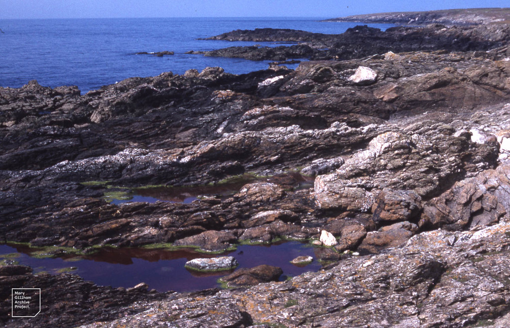 Shaly pre-cambrian rock on Bardsey west coast. Red pools. Dinoflagellates ?