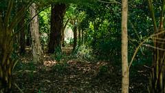 (VirtualWolf) Tags: australia bokeh canonef35mmf14lusm canoneos5dmarkiv flora kingspark perth techniques trees westernaustralia westernaustralianbotanicgarden