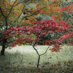 Dunham Massey (TheDavePhotoAlbum) Tags: dunham massey national trust garden deer park