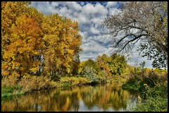 Down by the River (CTfotomagik) Tags: trees autumn colors leaves water river reflection cachelapoudreriver windsorco nature forest foliage seasons fall explore landscape nikon