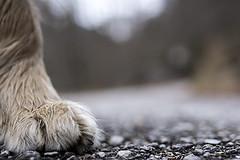 Born To Love (www.fabiofedrigo.net) Tags: fabiofedrigo mostrafotografica cani