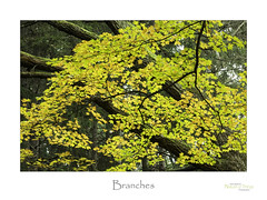 Branches (baldwinm16) Tags: il illinois november autumn autumncolor fall fallcolor foliage forest midwest nature wods woodland omot