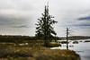 Les Marais du Nord (MichelGuérin) Tags: 2017 canada exterior extérieur lesmaraisdunord lightroomcc michelguérin nature nikon nikon2470mm nikond500 qc québec stonehamettewkesbury eau water