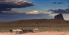 Feral Horses Drinking Water (soggymuppet62) Tags: horses running shiprock newmexico wild sky landscape feralhorse wildhorse canon 1200d t5