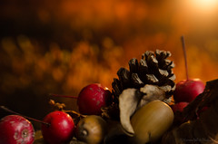 autumn debris (sure2talk) Tags: autumndebris autumn fall berries pinecone acorn leaves golden macro closeup shallowdof bokeh blur nikond7000 lensbaby lensbabycomposerpro sweet50optic macroconverter 8mm lensbabylove studio26