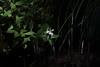spot light (yasushiinanaga) Tags: eos6d sigma150600mm natuer outside flower japan light