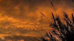 Reeds against cloudy sky at sunset (nikhrist) Tags: reeds sky sunset clouds nickchristodoulou