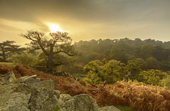 Bradgate Park in Autumn (John__Hull) Tags: breath taking landscapes autumn trees wood woods bradgate park newtown linford leicestershire charnwood uk countryside nikon d3200 sigma 1020mm mist fog