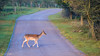 20171014-DSC_0641 (M van Oosterhout) Tags: amsterdamse waterleiding duine natuur nature flora fauna landschap landscape dutch holland amsterdam nederland netherlands animals