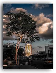 ENTARDECER NA AVDA. GETULIO VARGAS. (manxelalvarez) Tags: entardecer atardecer solpor puestadesol pordosol nubes cielos paisajes feiradesantana bahia brasil