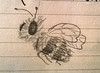 Abeja (Vicente Morales) Tags: vicentemorales cdmx mexico dibujo lápiz