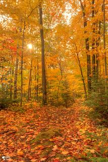 ''sentier d'automne!''
