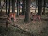 20171014-DSC_0607 (M van Oosterhout) Tags: amsterdamse waterleiding duine natuur nature flora fauna landschap landscape dutch holland amsterdam nederland netherlands animals