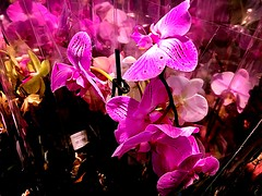 Nothing is worth it if You are not happy #HAPPYWEEKEND (RenateEurope) Tags: renateeurope ios11 iphoneography beautiful nature plants flowers pink orchids awesomeblossoms