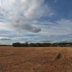 across the fields thumbnail