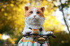 Rumbling (pure_embers) Tags: pure embers millie pureembers uk england anniemontgomerie kitty cat tricyle ride whimsical pet cute photography finderskeepers bike floora sun bokeh