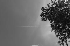 profili (MarcoAgustoniPhotography) Tags: schweiz suisse svizzera sky yverdon profili bn
