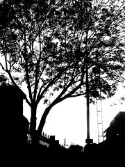 Vanishing foliage in Autumn 🍂 (LUMEN SCRIPT) Tags: tree silhouette sky autumn shadow backlight monochrome light blackwhite lumenscript m