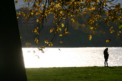 DUD_9717 (HAKANU) Tags: sweden stockholm kungsholmen smedsudd smedsudden smedsuddsbadet badplats park fall autumn colours colors yellow beach tree quiet bath glittering leaves