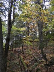 White Mountains Day 2 (tlucal) Tags: whitemountains fall nature fz80 flumegorge