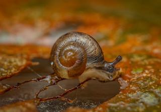 Teeny snail