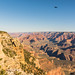 Black raven over the Grand Canyon