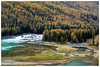 喀納斯臥龍灣 The Gulf of Wolong, Kanas (Alice 2018) Tags: xinjiang china autumn river colors plant tree travel sony saariysqualitypictures favorites150 best aatvl01 aatvl02 aatvl03 autofocus
