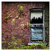 A Window Back In Time (GAPHIKER) Tags: willard asylum insane treatment facility newyork senecalake fingerlakes seneca lake window vines blind fall brick tattered
