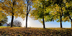Autumnal trees (++sepp++) Tags: herbst landscape landschaft landschaftsfotografie trees bäume fall autumn graben bayern bavaria deutschland germany gegenlicht backlight hdr