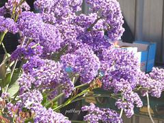 Purple blossom (pat.bluey) Tags: colourfulflowers purple light 1001nights 1001nightsmagiccity 1001nightsmagicgarden