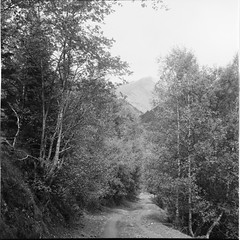 Alto Pirineo 2017 (davidgarciadorado) Tags: pirineos mountain path trees forest overcast rolleiflex zeiss planar ilford delta lleida catalonia spain ithinkthisisart