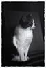 Mr. Smokey (S a b i r) Tags: sabir bangalore home cat smokey film ferrania filmferrania p30 alpha ei64 kodak hc110 dilh epsonv700