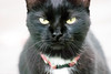 You tricked me! (Joy -> longing to chase flutterbies) Tags: angry rbf cat grumpy black
