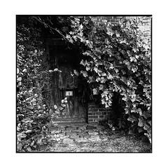 1 • bec hellouin, normandy • 2017 (lem's) Tags: 1 numero number door porte old house vieille maison busch lierre ivy bec hellouin normandy normandie zenza bronica