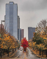 NE 4th in Autumn (Endless Reflection Photography) Tags: bellevuewashington bellevue downtownbellevue ne4thst lincolnsquareexpansion bellevuesquare bellevuesquaremall bellevuecollection bellevueautumn bellevuefall bellevuehistory seattleseastside bellevuerain endlessreflectionphotography cmerchant1 ereflectionphotos autumn fall bellevueskyline expediabuilding lincolnsquare autumninbellevue streetmeetwa visitbellevue cityofbellevue bellevuetowers kingcounty pnw seattle downtownbellevuepark bellevuedowntownpark bellevuedowntown