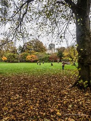 Bute Park Cardiff 2017 11 06 #35 (Gareth Lovering Photography 5,000,061) Tags: the royal welsh collage music drama building cardiff bute park wales autumn landscape capital olympus omdem10ii 14150mm garethloveringphotography