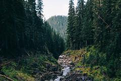 (JuanCarViLo) Tags: national park mount rainier mountain wilderness green trees fair wild river