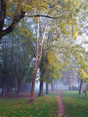 this morning (sean and nina) Tags: morning fog street path fall autum october petrinja croatia croatian hrvatska weather outdoor outside eu europe europen village town public trees park pathway leaves autumn