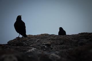 two dark companions