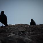 two dark companions thumbnail