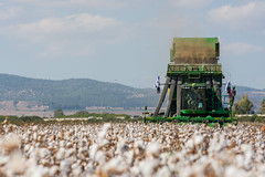 Cotton Picking - Israel (Yovel Rodoy) Tags: cotton israel israeli nature natureandnothingelse natural whitegold white green john johndeere jd picker harvest harvester landscape landscapes outdoor outside field fields rows row agriculture agri ag farming farm farminglife