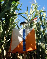 029 The Control Deep Within The Corn (saschmitz_earthlink_net) Tags: 2017 california temecula bighorsefeedandmercantile cornmaze orienteering laoc losangelesorienteeringclub corn